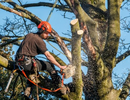 Aventura-South Florida Tri-County Tree Trimming and Stump Grinding Services-We Offer Tree Trimming Services, Tree Removal, Tree Pruning, Tree Cutting, Residential and Commercial Tree Trimming Services, Storm Damage, Emergency Tree Removal, Land Clearing, Tree Companies, Tree Care Service, Stump Grinding, and we're the Best Tree Trimming Company Near You Guaranteed!