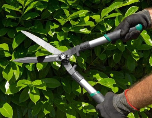 Boynton Beach-South Florida Tri-County Tree Trimming and Stump Grinding Services-We Offer Tree Trimming Services, Tree Removal, Tree Pruning, Tree Cutting, Residential and Commercial Tree Trimming Services, Storm Damage, Emergency Tree Removal, Land Clearing, Tree Companies, Tree Care Service, Stump Grinding, and we're the Best Tree Trimming Company Near You Guaranteed!