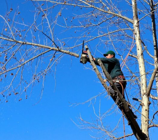 Contact Us-South Florida Tri-County Tree Trimming and Stump Grinding Services-We Offer Tree Trimming Services, Tree Removal, Tree Pruning, Tree Cutting, Residential and Commercial Tree Trimming Services, Storm Damage, Emergency Tree Removal, Land Clearing, Tree Companies, Tree Care Service, Stump Grinding, and we're the Best Tree Trimming Company Near You Guaranteed!