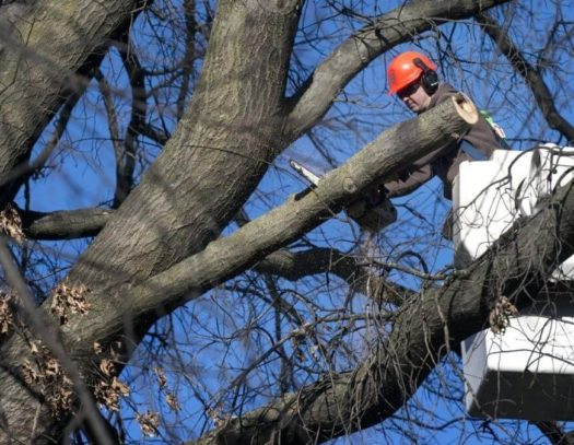Cooper City-South Florida Tri-County Tree Trimming and Stump Grinding Services-We Offer Tree Trimming Services, Tree Removal, Tree Pruning, Tree Cutting, Residential and Commercial Tree Trimming Services, Storm Damage, Emergency Tree Removal, Land Clearing, Tree Companies, Tree Care Service, Stump Grinding, and we're the Best Tree Trimming Company Near You Guaranteed!