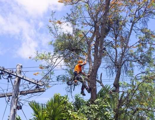 Dania Beach-South Florida Tri-County Tree Trimming and Stump Grinding Services-We Offer Tree Trimming Services, Tree Removal, Tree Pruning, Tree Cutting, Residential and Commercial Tree Trimming Services, Storm Damage, Emergency Tree Removal, Land Clearing, Tree Companies, Tree Care Service, Stump Grinding, and we're the Best Tree Trimming Company Near You Guaranteed!