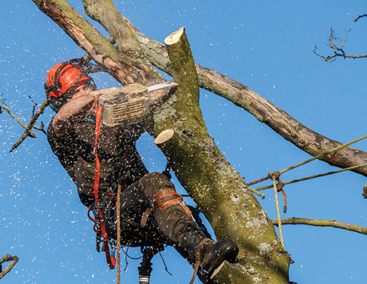 Doral-South Florida Tri-County Tree Trimming and Stump Grinding Services-We Offer Tree Trimming Services, Tree Removal, Tree Pruning, Tree Cutting, Residential and Commercial Tree Trimming Services, Storm Damage, Emergency Tree Removal, Land Clearing, Tree Companies, Tree Care Service, Stump Grinding, and we're the Best Tree Trimming Company Near You Guaranteed!