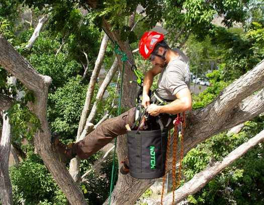 Golden Glades-South Florida Tri-County Tree Trimming and Stump Grinding Services-We Offer Tree Trimming Services, Tree Removal, Tree Pruning, Tree Cutting, Residential and Commercial Tree Trimming Services, Storm Damage, Emergency Tree Removal, Land Clearing, Tree Companies, Tree Care Service, Stump Grinding, and we're the Best Tree Trimming Company Near You Guaranteed!