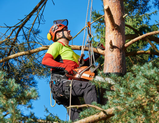 Hallandale Beach-South Florida Tri-County Tree Trimming and Stump Grinding Services-We Offer Tree Trimming Services, Tree Removal, Tree Pruning, Tree Cutting, Residential and Commercial Tree Trimming Services, Storm Damage, Emergency Tree Removal, Land Clearing, Tree Companies, Tree Care Service, Stump Grinding, and we're the Best Tree Trimming Company Near You Guaranteed!