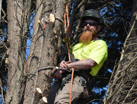 Kendall Lakes-South Florida Tri-County Tree Trimming and Stump Grinding Services-We Offer Tree Trimming Services, Tree Removal, Tree Pruning, Tree Cutting, Residential and Commercial Tree Trimming Services, Storm Damage, Emergency Tree Removal, Land Clearing, Tree Companies, Tree Care Service, Stump Grinding, and we're the Best Tree Trimming Company Near You Guaranteed!