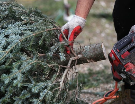 Palm Beach County-South Florida Tri-County Tree Trimming and Stump Grinding Services-We Offer Tree Trimming Services, Tree Removal, Tree Pruning, Tree Cutting, Residential and Commercial Tree Trimming Services, Storm Damage, Emergency Tree Removal, Land Clearing, Tree Companies, Tree Care Service, Stump Grinding, and we're the Best Tree Trimming Company Near You Guaranteed!