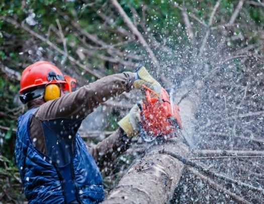 Palm Beach Gardens-South Florida Tri-County Tree Trimming and Stump Grinding Services-We Offer Tree Trimming Services, Tree Removal, Tree Pruning, Tree Cutting, Residential and Commercial Tree Trimming Services, Storm Damage, Emergency Tree Removal, Land Clearing, Tree Companies, Tree Care Service, Stump Grinding, and we're the Best Tree Trimming Company Near You Guaranteed!