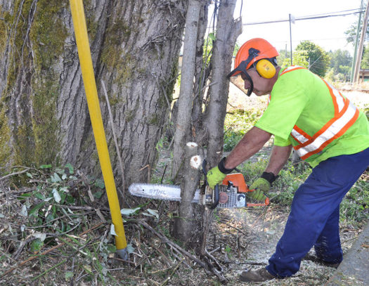 Palm Beach Island-South Florida Tri-County Tree Trimming and Stump Grinding Services-We Offer Tree Trimming Services, Tree Removal, Tree Pruning, Tree Cutting, Residential and Commercial Tree Trimming Services, Storm Damage, Emergency Tree Removal, Land Clearing, Tree Companies, Tree Care Service, Stump Grinding, and we're the Best Tree Trimming Company Near You Guaranteed!