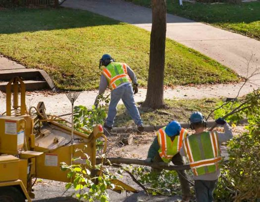 Palm Springs-South Florida Tri-County Tree Trimming and Stump Grinding Services-We Offer Tree Trimming Services, Tree Removal, Tree Pruning, Tree Cutting, Residential and Commercial Tree Trimming Services, Storm Damage, Emergency Tree Removal, Land Clearing, Tree Companies, Tree Care Service, Stump Grinding, and we're the Best Tree Trimming Company Near You Guaranteed!
