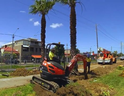 Palm Tree Removal-South Florida Tri-County Tree Trimming and Stump Grinding Services-We Offer Tree Trimming Services, Tree Removal, Tree Pruning, Tree Cutting, Residential and Commercial Tree Trimming Services, Storm Damage, Emergency Tree Removal, Land Clearing, Tree Companies, Tree Care Service, Stump Grinding, and we're the Best Tree Trimming Company Near You Guaranteed!
