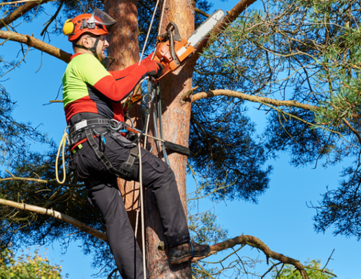 Palmetto Bay-South Florida Tri-County Tree Trimming and Stump Grinding Services-We Offer Tree Trimming Services, Tree Removal, Tree Pruning, Tree Cutting, Residential and Commercial Tree Trimming Services, Storm Damage, Emergency Tree Removal, Land Clearing, Tree Companies, Tree Care Service, Stump Grinding, and we're the Best Tree Trimming Company Near You Guaranteed!