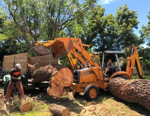 Pembroke Pines-South Florida Tri-County Tree Trimming and Stump Grinding Services-We Offer Tree Trimming Services, Tree Removal, Tree Pruning, Tree Cutting, Residential and Commercial Tree Trimming Services, Storm Damage, Emergency Tree Removal, Land Clearing, Tree Companies, Tree Care Service, Stump Grinding, and we're the Best Tree Trimming Company Near You Guaranteed!