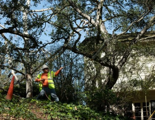Royal Palm Beach-South Florida Tri-County Tree Trimming and Stump Grinding Services-We Offer Tree Trimming Services, Tree Removal, Tree Pruning, Tree Cutting, Residential and Commercial Tree Trimming Services, Storm Damage, Emergency Tree Removal, Land Clearing, Tree Companies, Tree Care Service, Stump Grinding, and we're the Best Tree Trimming Company Near You Guaranteed!
