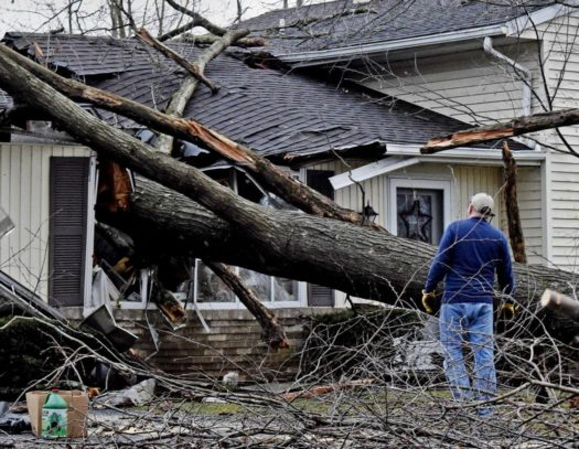 Storm Damage-South Florida Tri-County Tree Trimming and Stump Grinding Services-We Offer Tree Trimming Services, Tree Removal, Tree Pruning, Tree Cutting, Residential and Commercial Tree Trimming Services, Storm Damage, Emergency Tree Removal, Land Clearing, Tree Companies, Tree Care Service, Stump Grinding, and we're the Best Tree Trimming Company Near You Guaranteed!