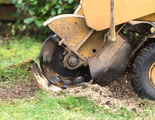 Stump Grinding-South Florida Tri-County Tree Trimming and Stump Grinding Services-We Offer Tree Trimming Services, Tree Removal, Tree Pruning, Tree Cutting, Residential and Commercial Tree Trimming Services, Storm Damage, Emergency Tree Removal, Land Clearing, Tree Companies, Tree Care Service, Stump Grinding, and we're the Best Tree Trimming Company Near You Guaranteed!