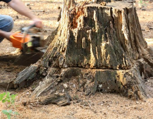 Stump Removal-South Florida Tri-County Tree Trimming and Stump Grinding Services-We Offer Tree Trimming Services, Tree Removal, Tree Pruning, Tree Cutting, Residential and Commercial Tree Trimming Services, Storm Damage, Emergency Tree Removal, Land Clearing, Tree Companies, Tree Care Service, Stump Grinding, and we're the Best Tree Trimming Company Near You Guaranteed!