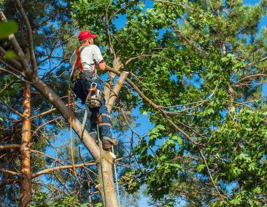 Tamarac-South-Florida-Tri-County-Tree-Trimming-and-Stump-Grinding-Services-We Offer Tree Trimming Services, Tree Removal, Tree Pruning, Tree Cutting, Residential and Commercial Tree Trimming Services, Storm Damage, Emergency Tree Removal, Land Clearing, Tree Companies, Tree Care Service, Stump Grinding, and we're the Best Tree Trimming Company Near You Guaranteed!
