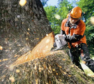 Tree Cutting-South Florida Tri-County Tree Trimming and Stump Grinding Services-We Offer Tree Trimming Services, Tree Removal, Tree Pruning, Tree Cutting, Residential and Commercial Tree Trimming Services, Storm Damage, Emergency Tree Removal, Land Clearing, Tree Companies, Tree Care Service, Stump Grinding, and we're the Best Tree Trimming Company Near You Guaranteed!