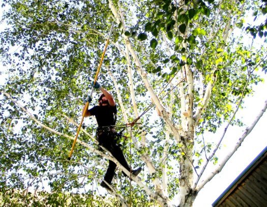 West Miami-South Florida Tri-County Tree Trimming and Stump Grinding Services-We Offer Tree Trimming Services, Tree Removal, Tree Pruning, Tree Cutting, Residential and Commercial Tree Trimming Services, Storm Damage, Emergency Tree Removal, Land Clearing, Tree Companies, Tree Care Service, Stump Grinding, and we're the Best Tree Trimming Company Near You Guaranteed!