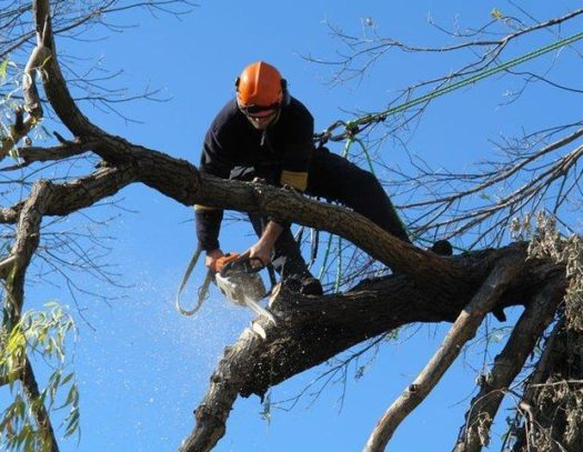 Weston-South Florida Tri-County Tree Trimming and Stump Grinding Services-We Offer Tree Trimming Services, Tree Removal, Tree Pruning, Tree Cutting, Residential and Commercial Tree Trimming Services, Storm Damage, Emergency Tree Removal, Land Clearing, Tree Companies, Tree Care Service, Stump Grinding, and we're the Best Tree Trimming Company Near You Guaranteed!
